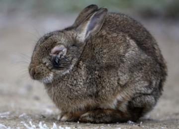 Что делать, если у кролика вздулся живот?