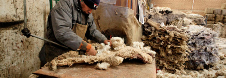 Переработка шерсти овец