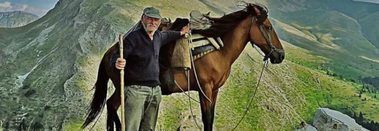 Пиндос (тесальская лошадь)