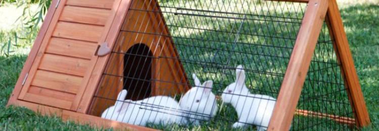 Как сделать клетку для декоративного кролика своими руками?