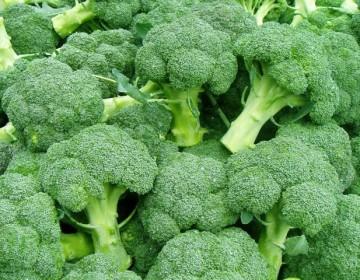 Лучшие сорта капусты брокколи с описанием
