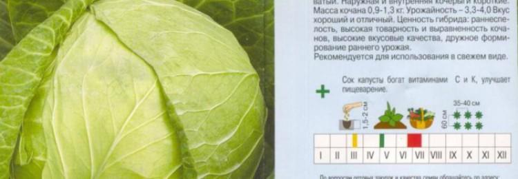 Ультраранний сорт белокочанной капусты Экспресс F1