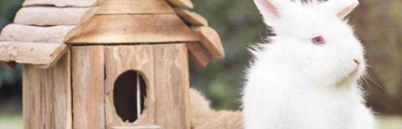 Новозеландские кролики описание белой и красной породы