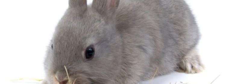 Сколько сена нужно заготовить кролику на зиму?