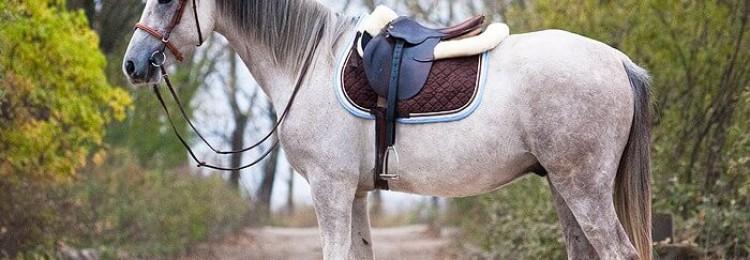 Домашняя лошадь