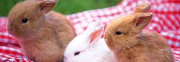 Сколько лет живут декоративные кролики в квартире?
