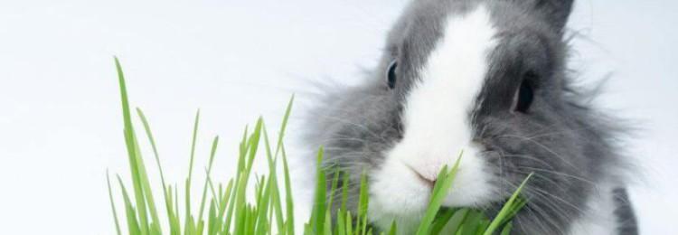 Как правильно и чем следует кормить кроликов летом