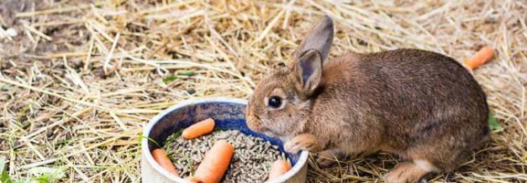 Календарь кроликовода — разведение кроликов