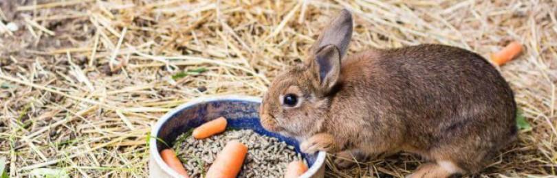 Календарь кроликовода – разведение кроликов