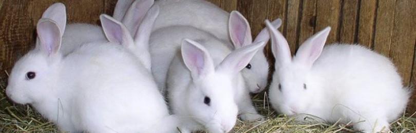 Когда можно снова покрыть крольчиху после окрола?