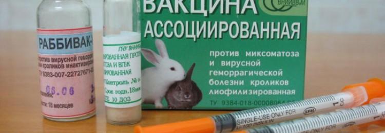 Вакцина Раббивак V