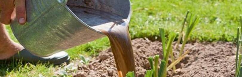 Как правильно выращивать лук-порей: ТОП самых эффективные способов посадки и ухода