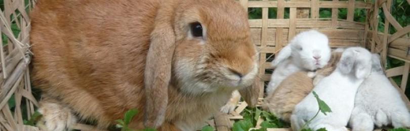 Разведение кроликов на даче для начинающих