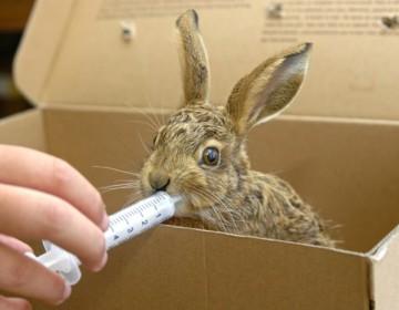 Препарат Соликокс для кроликов: как давать?