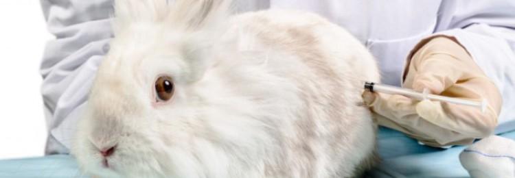Прививки для декоративных кроликов