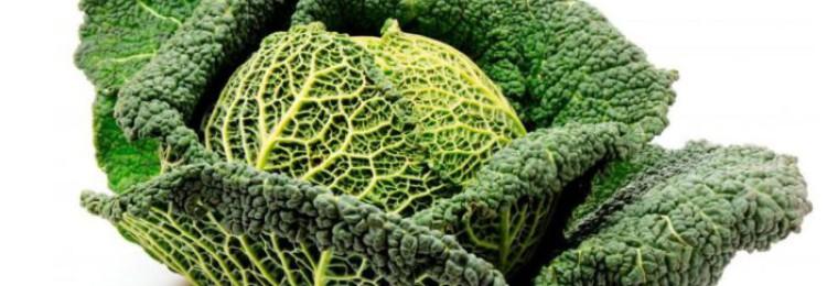 Как хранить савойскую капусту в течение всей зимы?