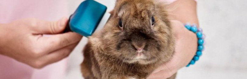 Нужна ли кроликам вакцинация от бешенства?