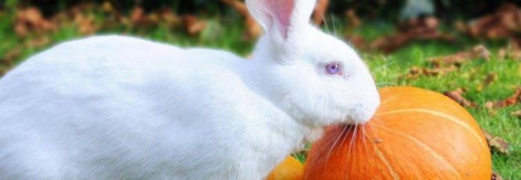 Тыква и кабачки: можно ли давать их кроликам и как правильно вводить овощи в рацион