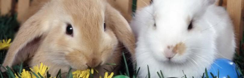 Трава для декоративных кроликов