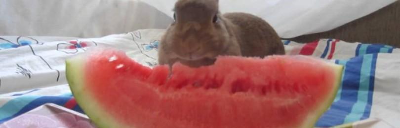 Можно ли кормить кроликов арбузными корками?