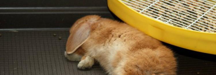 Как и сколько спят кролики?