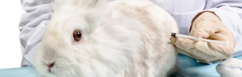 Обязательные и необязательные прививки кроликам