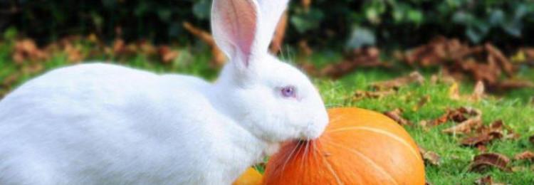 Едят ли кролики кабачки и тыкву?