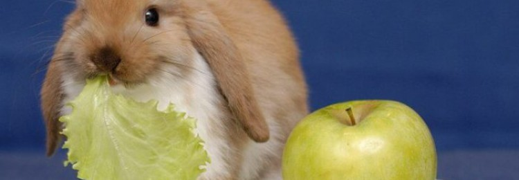Можно ли кормить кроликов яблоками?