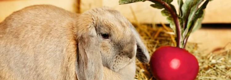 Можно ли кормить кроликов свеклой?