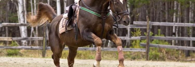 Как бинтовать ноги лошади?