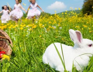 Как содержать декоративного кролика в квартире?
