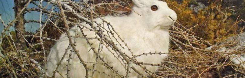 Где найти и как поймать кролика