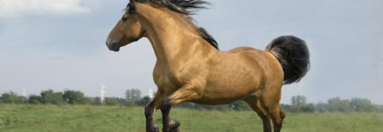 Породы упряжные лошадей