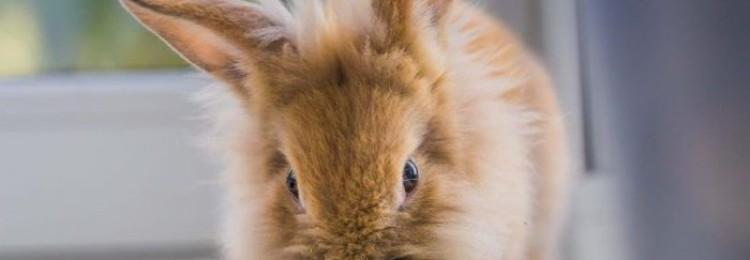 Огурцы кроликам: можно ли давать свежие плоды?