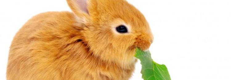 Чем кормить кроликов чтобы они быстро набирали вес?