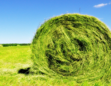 Сколько тонн сена нужно корове на зиму?