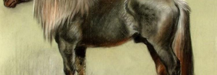Битюг порода лошадей