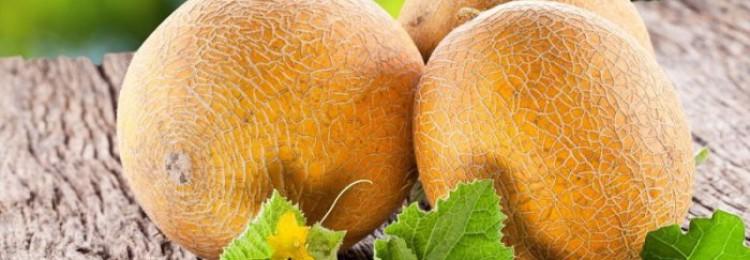 Можно ли кормить кроликов дыней и корками?
