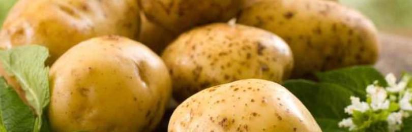 Можно ли кроликам картофель: сырой, отварной, ботву, очистки?