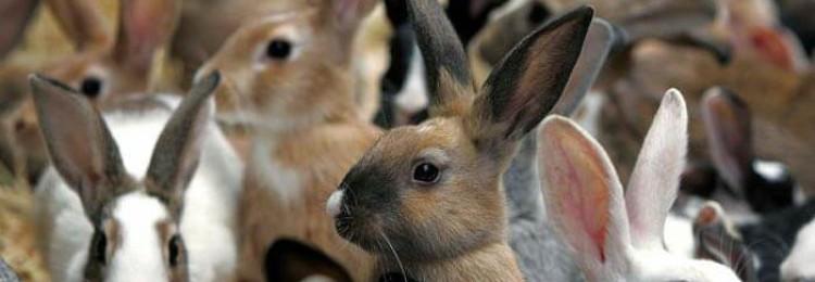 Разведение кроликов как бизнес — выгодно или нет?