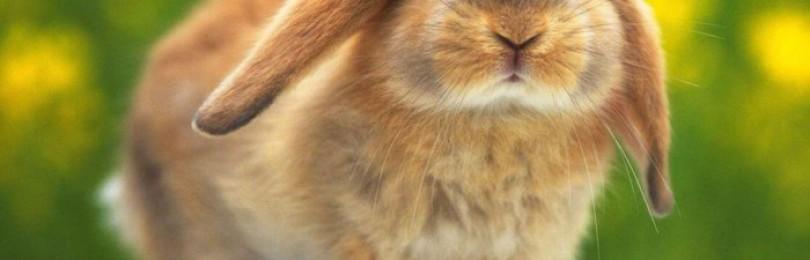 Как ухаживать за кроликами?