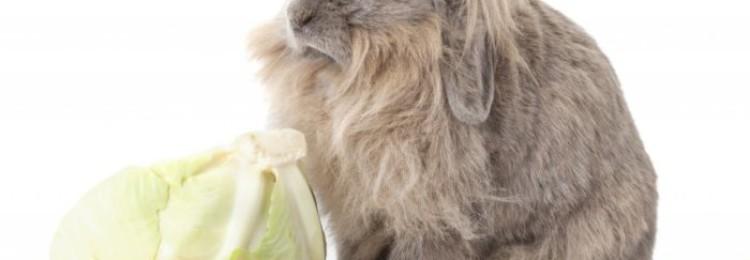 Как правильно давать кроликам кукурузу — зёрна, побеги и листья растения?