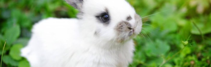 Что ест декоративный кролик?