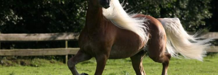 Лошади игреневой масти