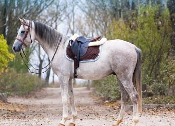 Какие породы лошадей разводят на Урале?