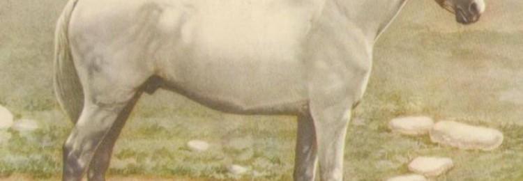 Иомудская порода лошадей