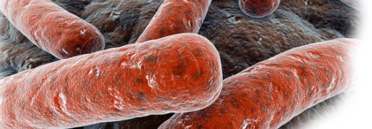 Туберкулез у КРС