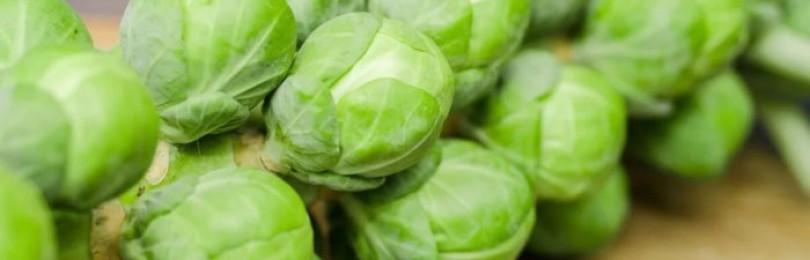Надо ли и когда обрывать листья у брюссельской капусты