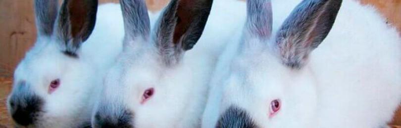 Сколько весит кролик?