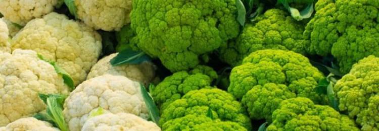 Цветная капуста: выращивание и уход в теплице